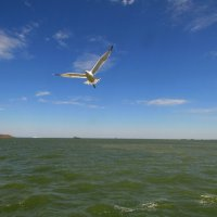 Над морем :: Marina Timoveewa