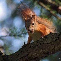 Три орешка для Белочки :: Тата Казакова