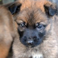 Litle dogs :: Юлия Савицкая