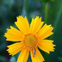цветы :: Андрей Кураков