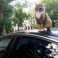 Моя новая сигнализация :: Ирина Крохмаль