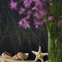 Натюрморт с морской звездой. :: Лазарева Оксана