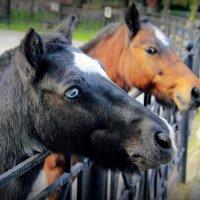 лошадки :: Tasha Скосырева