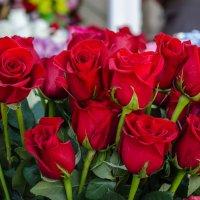 Розы красные... :: Юрий Анипов