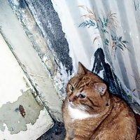 Утренняя ЗАБАСТОВКА:  кошачья, сидячая... :: Валерий Викторович РОГАНОВ-АРЫССКИЙ