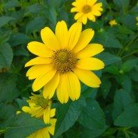 Цветок :: Serg