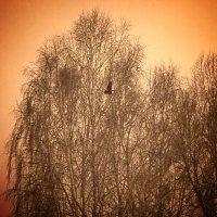 Деревья. :: Екатерина