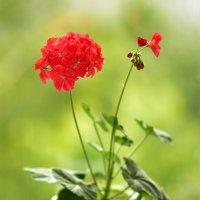 Пылающие факелы соцветий. :: Svetlana .S.