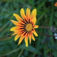 Летние цветы... :: Nataliya Oleinik
