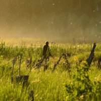 Трава,вечер,комары... :: Сергей Адигамов