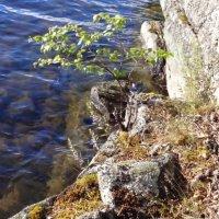 Вода и камень :: Жанна Румянцева