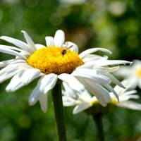 цветок :: Екатерина Цуркова