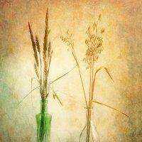 Травы :: Юлия Эйснер