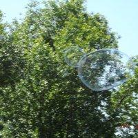 мыльный пузырь :: Olga Kot