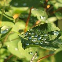 после дождя :: анастасия
