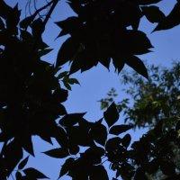 в небо... :: Archi Wilde