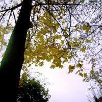 Осенняя фантазия :: Tarka