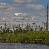 Затерявшаяся река... :: Виктор Грузнов