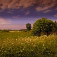 Летние пейзажи :: Наталья Лакомова