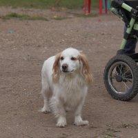 Просто собака. :: Андрей Дурапов