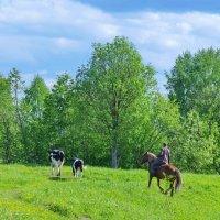 Пастух и его стадо :: Валерий Талашов
