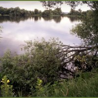 Июньская река Москва. :: Ольга Кривых