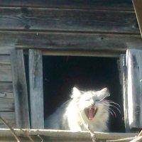 Часы...с кошкой...)) :: Просто witamin
