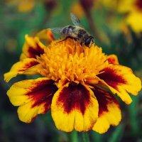 цветок :: Маняша Карлова