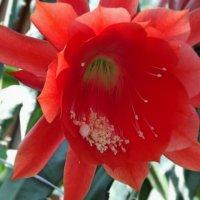 Таинство цветения :: Domna Kuznechic