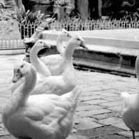 гуси-лебеди :: Тамара Бердыева