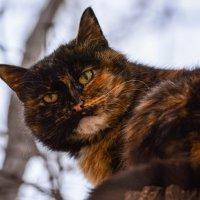 Котя :: Jane Eyre *