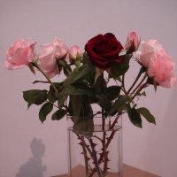 цветы майского настроения :: Ольга Винокурова