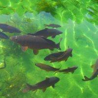 Рыбки :: Лариса Евдокимова