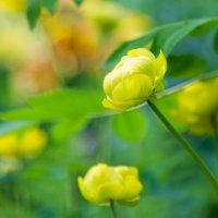 желтые цветы :: Наталья Василькова