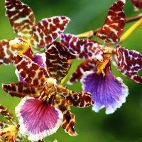 Словно бабочки :: Nikolay Monahov
