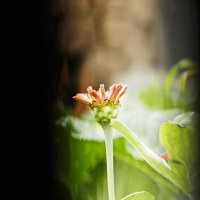 цветок :: Arti Aban