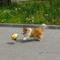 Играем мячом :: Людмила Чернявская
