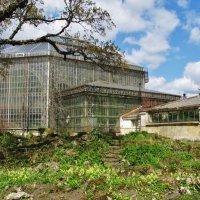 Оранжерея Ботанического сада. :: ТАТЬЯНА (tatik)
