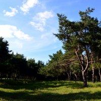 лес :: Alice Madman