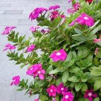 Цветочки :: Наталья Нарсеева