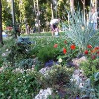 Садово-парковый дизайн :: Vitink Виктория