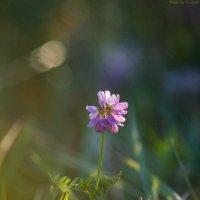 Flora :: Ivan teamen