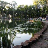 Пруд в парке :: Vitink Виктория