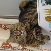 - Чем  помочь ???? Может холодильник  открыть??!!!!! :: Galina Leskova