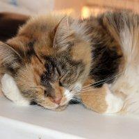 Спят усталые игрушки... :: Руслан 1111