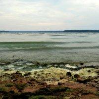 Каунасское Море IV :: Kliwo