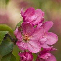 Розовым рассветом, как сады в цвету, уплывает нежность тихо в высоту... :: Наташа (tasha7) Хомутецкая