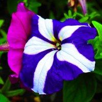 шёпот цветов :: Валерий Дворников