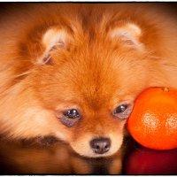 А не люблю я апельсины :: Leo Alex Photographer