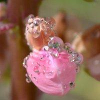 капельки дождя :: Лёля Hrom